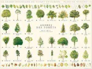 Arbres de la forêt
