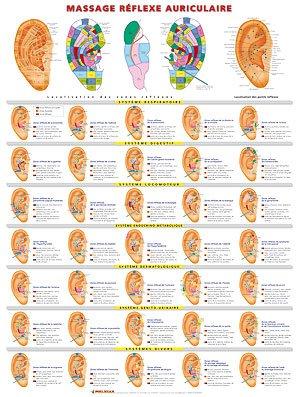 Planche de massage réflexe auriculaire-phu-xuan-2224489828865