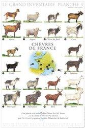 Chèvres de France