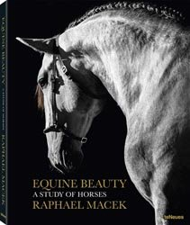 Equine beauty - A study of horses
