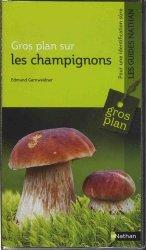 Gros plan sur les champignons