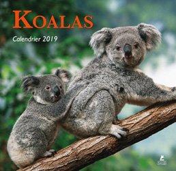 Koalas calendrier 2019