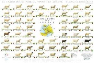 Moutons de France
