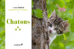 Calendrier 52 semaines Chatons - du chene - 9782812316975