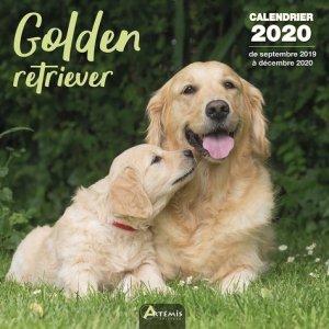 Golden retriever-artemis-9782816015133