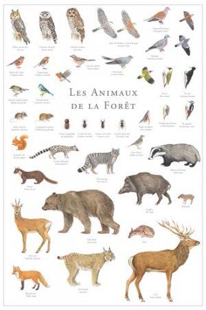 Les animaux de la forêt-gulf stream-2225012448932