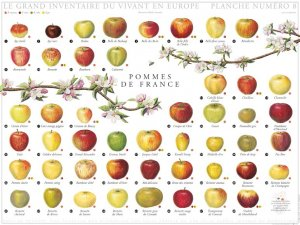 Pommes de France-gulf stream -2225186147495