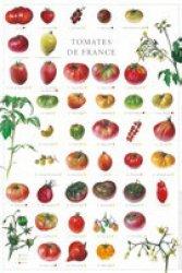 Tomates de France-gulf stream -2225193939458