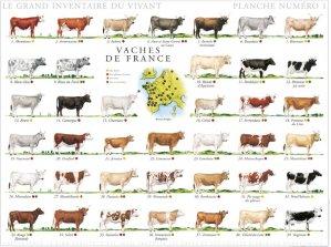 Vaches de France - gulf stream - 2225012442237