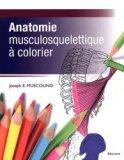 Anatomie musculosquelettique � colorier