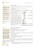 Plantation et taille d'un arbre de plein champ