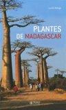 Plante de Madagascar